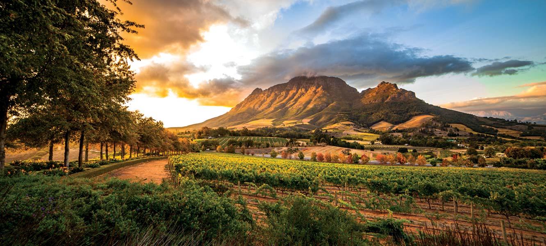 Safari i wina Przylądka Dobrej Nadziei