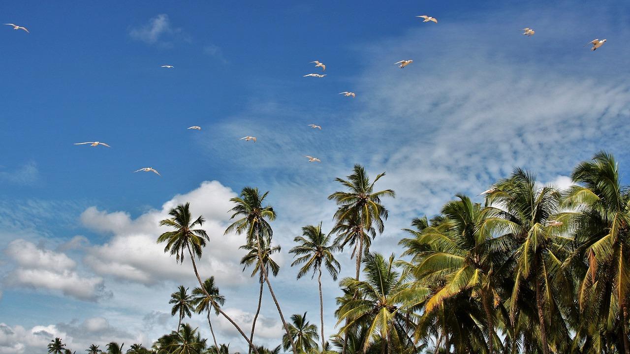 Sri Lanka – kolej, herbata i rajskie plaże (dla Singli) 20 października 2021 – 31 października 2021